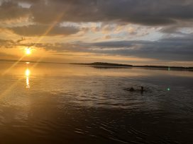 Swimming On The Lake Near Sundown